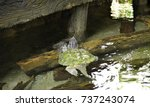 close up of alligator snapping... | Shutterstock . vector #737243074