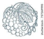 hand drawn grape vine... | Shutterstock .eps vector #737269990