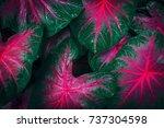 green leaf texture. leaf... | Shutterstock . vector #737304598