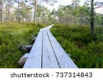 Wooden Boardwalk In Swamp...
