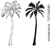 palm tree  illustration ... | Shutterstock .eps vector #737330080
