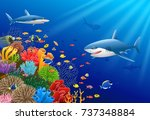 cartoon shark with coral reef... | Shutterstock .eps vector #737348884