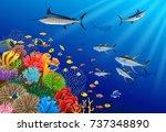 blue marlin fish swimming under ... | Shutterstock .eps vector #737348890