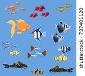 exotic tropical aquarium fish...   Shutterstock .eps vector #737401120