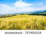 paddy in china | Shutterstock . vector #737403124