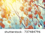 yellow leaves in snow on sun.... | Shutterstock . vector #737484796