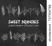 vector branches hand drawn ... | Shutterstock .eps vector #737504788
