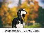 saluki | Shutterstock . vector #737532508