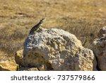 lizard on a yellow stone kato...   Shutterstock . vector #737579866