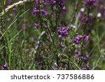 linn of tummel views | Shutterstock . vector #737586886