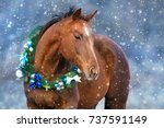 Stock photo red horse portrait in christmas decoration wreath 737591149