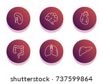 internal organs icon set. flat... | Shutterstock .eps vector #737599864