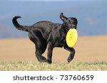 Labrador Retriever Dog Puppy 4...