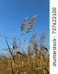 autumn landscape | Shutterstock . vector #737622100