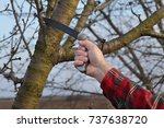 pruning tree in orchard ... | Shutterstock . vector #737638720
