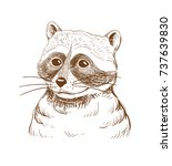 sketch of raccoon on white...