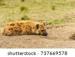 a spotted hyena is lying on the ... | Shutterstock . vector #737669578