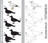 gull to find the correct shadow ... | Shutterstock .eps vector #737680810