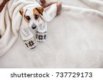 dog under a plaid. pet warms... | Shutterstock . vector #737729173