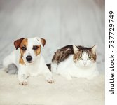 dog and cat. friends at home.... | Shutterstock . vector #737729749