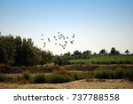 egyptian countryside  fayoum ... | Shutterstock . vector #737788558