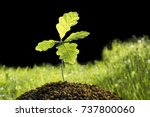 small oak plant. tree oak... | Shutterstock . vector #737800060