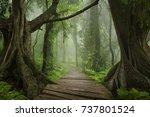 asian jungle   Shutterstock . vector #737801524
