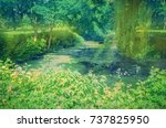 willow tree by the water....   Shutterstock . vector #737825950