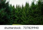 huge christmas trees | Shutterstock . vector #737829940