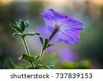 purple flowers retro style... | Shutterstock . vector #737839153