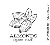 hand drawn vector almond nuts... | Shutterstock .eps vector #737840170