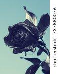 black rose. concept  symbol of... | Shutterstock . vector #737880076