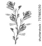 hand drawn garden flower | Shutterstock .eps vector #737883250