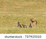 Whitetail Deer And Wild Turkey...