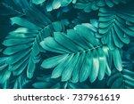 Tropical Jungle Foliage  Nature ...