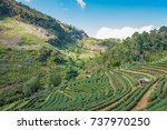 tea plantation in mountain view. | Shutterstock . vector #737970250