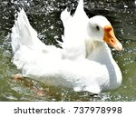 Small photo of Goose - bathing is fun