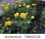 some marigolds that thai people ... | Shutterstock . vector #738022120