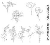 vector drawing flowers ... | Shutterstock .eps vector #738026026