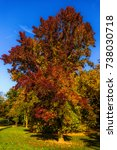 Small photo of Intense colored nature landscape outdoor fall foliage photo of a park taken with an american storax in the center with red, orange, yellow and green leaves on a sunny autumn day with blue sky