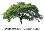 isolate tree on white... | Shutterstock . vector #738044680