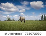 soft clouds over the farm... | Shutterstock . vector #738073030