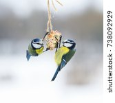 Cute Hungry Birds Fly Tit At...