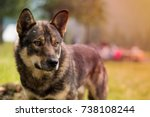 Stock photo dog on green grass outdoors dog outdoors dog portrait 738108244