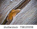 Frosty Oak Leaf In Tree Trunk...