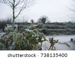 Frosty Leaves And Plants In...