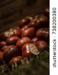 Small photo of Conkers on Grass Ground, Horse Chestnut, Autumn Fall Background Equinox Buckeye Rustic Water Droplets Wood Texture