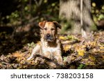 autumn dog portrait  terrier... | Shutterstock . vector #738203158