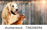 Stock photo cat and dog together abyssinian cat golden retriever look at right with sticking out tongue 738208396