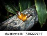 the butterfly cruiser butterfly ...   Shutterstock . vector #738220144